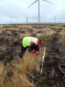 Botanist sampling colonising vegetation