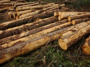 Timber being harvested