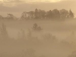 Woodland in mist
