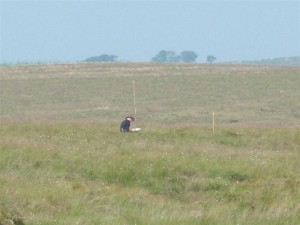 Quadrat survey on blanket bog